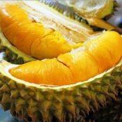 Durian Yang Bakalan Ngehits 5 Tahun ke Depan di Indonesia